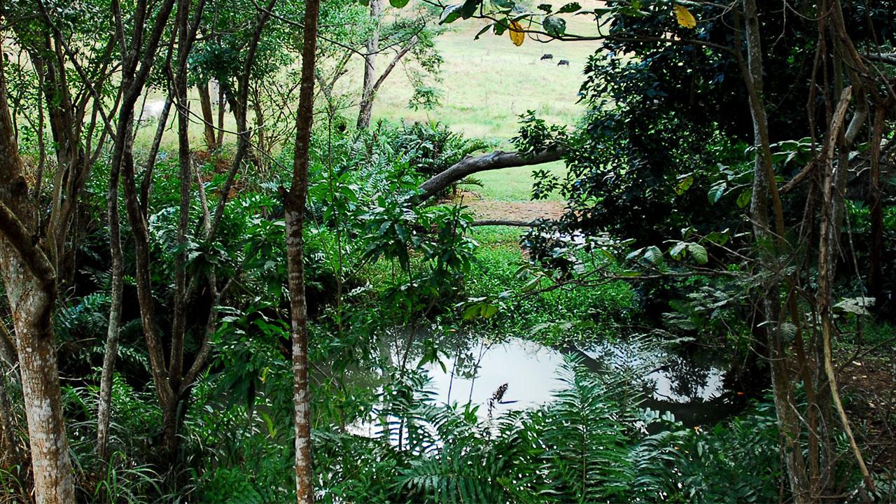 O programa Rio Rural, idealizado pelo deputado Christino Áureo, libera mais R$ 2 milhões para produtores do Sul Fluminense.