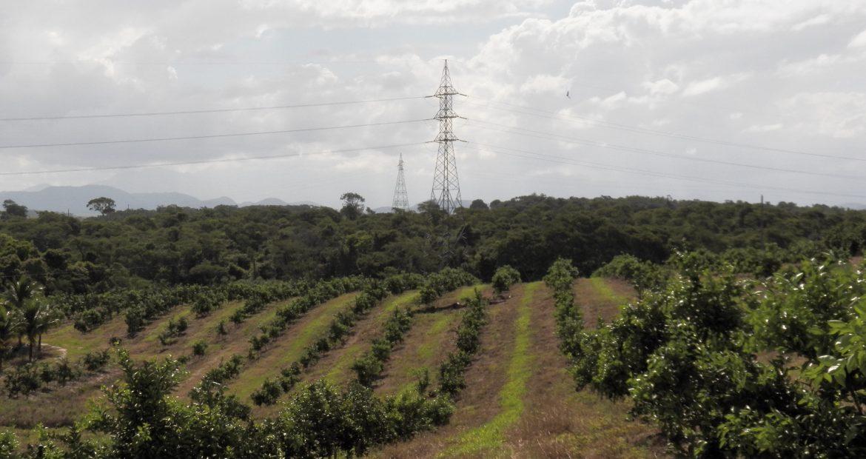 Produção de citros cresce na Baixada Litorânea e Metropolitana do Rio