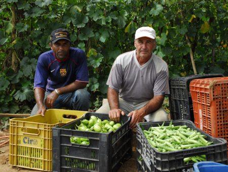 Fundação Banco do Brasil e Agricultura do Estado firmam parceria para doação de alimentos da agricultura familiar