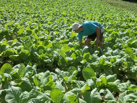Christino consegue mais ajuda aos produtores rurais fluminenses, muito afetados pela pandemia